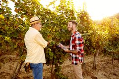 Smiling father and son controlling vine in vineyard Stock Image
