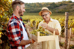 Smiling father vintner showing grapes to son. In vineyard Royalty Free Stock Photography