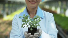 Smiling female biologist holding green plant, greenhouse cultivation, botany