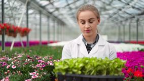 Smiling female biology researcher walking in greenhouse holding box with plants looking at camera. Woman agriculture engineer wearing uniform during working stock video footage
