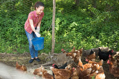 Smiling female farm worker feeding stuff to chickens Royalty Free Stock Photos