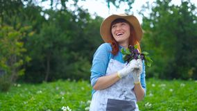 Smiling female gardener posing with zucchini plants and looking at camera, farming and gardening concept.  stock video