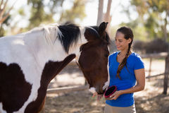 Smiling female jockey cleaning horse. While standing at paddock Stock Images