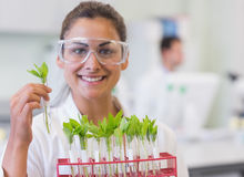 Smiling female scientist analyzing young plants at lab Stock Photography