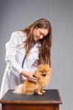 Smiling female vet with phonendoscope holding cute pomeranian do Royalty Free Stock Photo