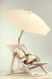 Smiling ferret portrait on beach chair in studio. Ferret portrait on beach chair in studio Stock Photos