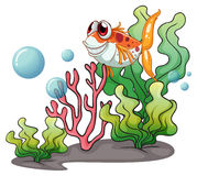 A smiling fish near the corals Royalty Free Stock Photography