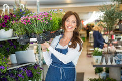 Smiling Florist Carrying Crate Full Of Flower Stock Images