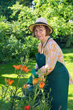 Smiling friendly lady watering plants in a garden. Royalty Free Stock Photography