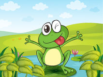 A smiling frog. Illustration of a smiling frog in a beautiful nature Royalty Free Stock Image