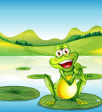 A smiling frog above the waterlily at the pond Royalty Free Stock Images