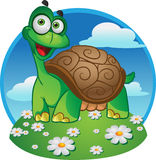 Smiling fun tortoise on a color background Stock Images