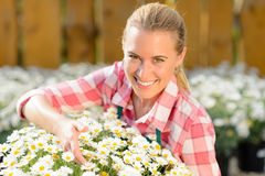 Smiling garden center woman potted daisy flowers Royalty Free Stock Images