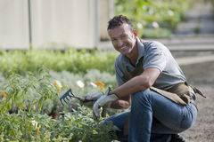 Smiling gardener. In a greenhouse Stock Images