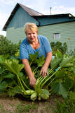 Smiling gardener in vegetable garden. Royalty Free Stock Photography