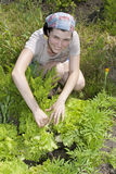 Smiling gardener in vegetable garden. Royalty Free Stock Photography