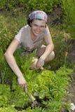 Smiling gardener in vegetable garden. Royalty Free Stock Image