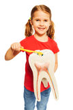 Smiling girl brushing tooth model with toothbrush Stock Photography
