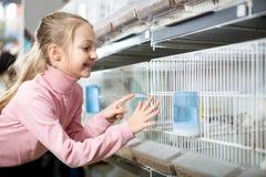 Smiling girl choosing pretty bird. Little beautiful girl choosing pretty bird for keeping in pet shop Royalty Free Stock Image