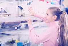 Smiling girl choosing pretty bird. Little positive girl choosing pretty bird for keeping in pet shop Royalty Free Stock Photo