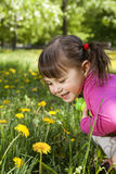 A smiling girl with the dandelion. A smiling girl wearing a pink shirt, sitting on the dandelion field and observing a flower Stock Images