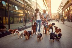 Smiling girl and man dog walker in the street with dogs royalty free stock photos