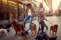 Girl and man dog walker with group of dogs enjoying in walk stock image