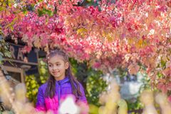 Smiling girl among red leaves stock photo