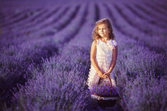 Smiling girl sniffing flowers in a lavender field Royalty Free Stock Image