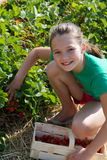Smiling girl to pick strawberries Royalty Free Stock Photo