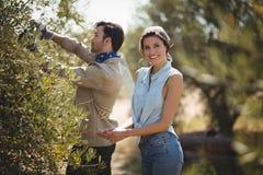 Smiling girlfriend with boyfriend plucking olives at farm. Portrait of smiling girlfriend with boyfriend plucking olives at farm stock photography