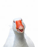 Smiling goose Royalty Free Stock Images