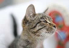 Smiling gray tabby cat in profile. Close portrait on the background of Christmas decorations Stock Image