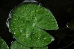 Close-up of rain drops on a green leaf stock photography