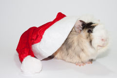 Smiling guinea pig under Santa Claus hat Stock Image