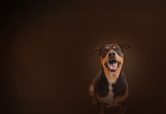 Smiling happily black dog on classic and vintage colour background Royalty Free Stock Photos