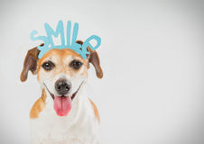 Smiling Happy dog Royalty Free Stock Image