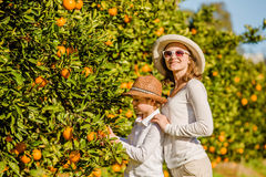 Smiling happy mother and son harvesting oranges Stock Image