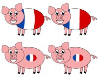 A smiling and happy pig raised in France stock image