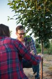 Smiling happy young female and male farmer and agronomist inspecting grafted fruit tree in a large orchard stock image