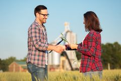 Smiling happy young male and female farmers or agronomists shaking hands in a wheat field. Inspecting crops before the harvest royalty free stock images