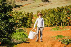 Smiling healthy boy on citrus farm holding bucket Royalty Free Stock Photo