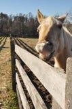 Smiling Horse Stock Photo