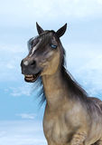 Smiling Horse Royalty Free Stock Photos