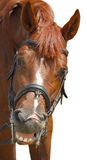 Smiling horse Royalty Free Stock Images