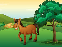 A smiling horse Royalty Free Stock Images