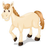 A smiling horse. Illustration of a smiling horse on a white background Stock Image