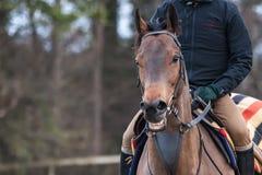 Smiling Horse Royalty Free Stock Image