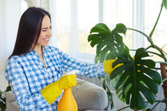 Smiling housewife splashing water on leaves of houseplant Royalty Free Stock Photos