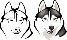 Smiling Husky. Vector drawing of the dogs head smiling Royalty Free Stock Photo
